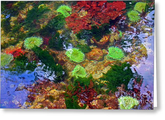 Abstract Tidal Pool Greeting Card