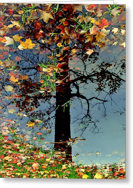 Abstract Tree Greeting Card by Frozen in Time Fine Art Photography
