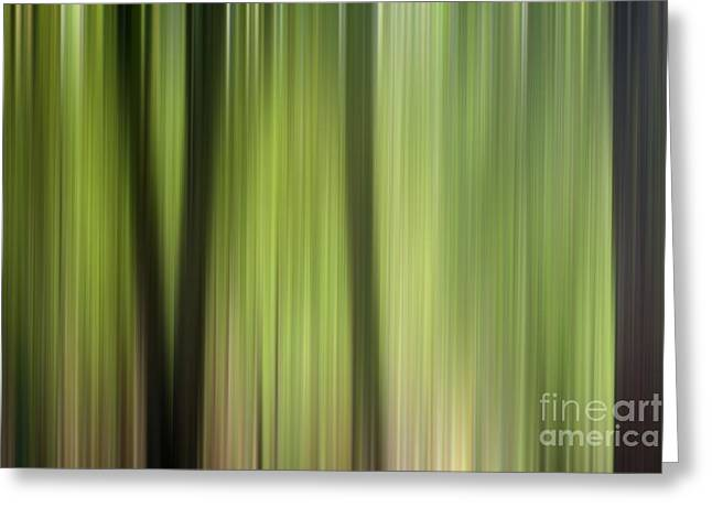 Abstract Trees In The Forest Greeting Card by Natalie Kinnear