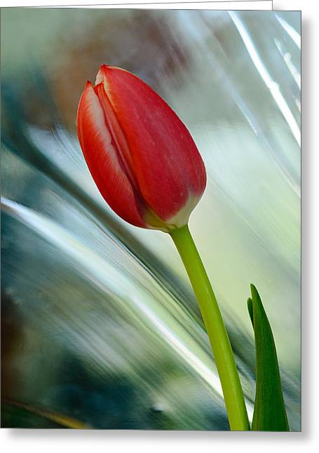 Abstract Tulip Under Glass Greeting Card