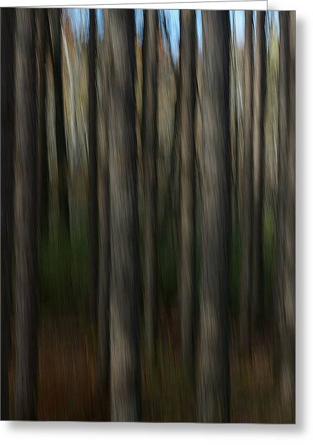 Abstract Woods Greeting Card