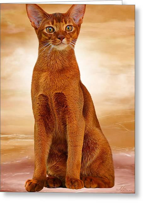 Abyssinian Cat Sorrel Color Greeting Card