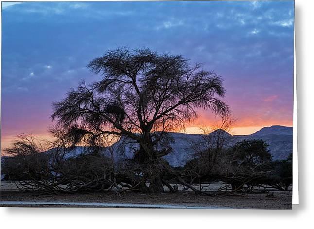 Acacia At Sunset Greeting Card by Photostock-israel