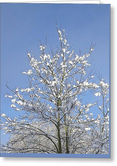 Ash Tree In Winter Greeting Card