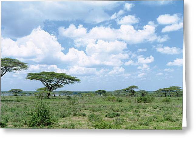 Acacia Trees On A Landscape, Lake Greeting Card by Panoramic Images