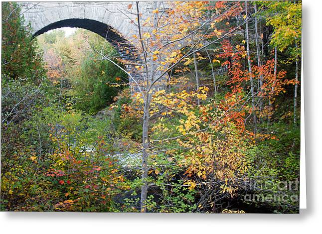 Acadia Carriage Bridge Greeting Card