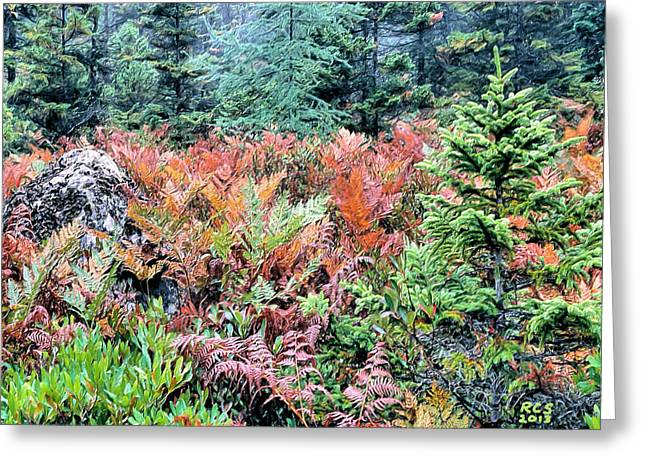 Acadia Ferns Greeting Card