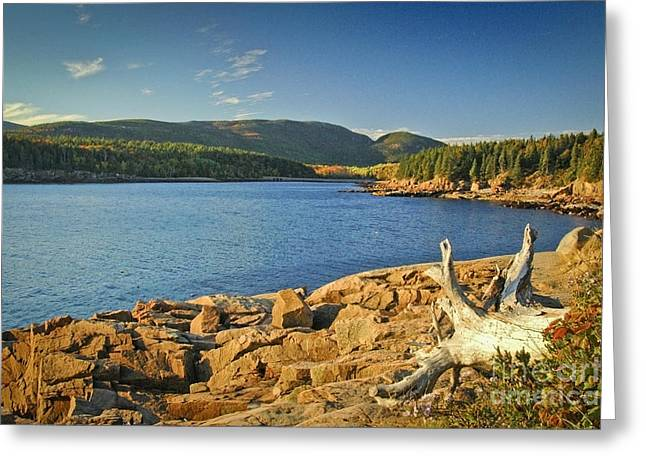 Acadia Otter Cove Greeting Card by Alana Ranney