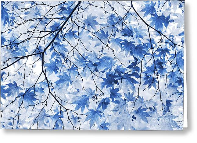 Acer Blue Greeting Card by Tim Gainey