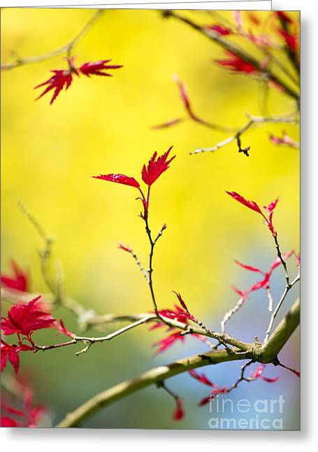 Acer Colour Greeting Card