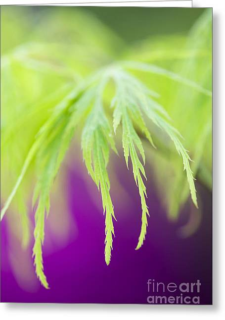Acer Leaves Greeting Card by Tim Gainey
