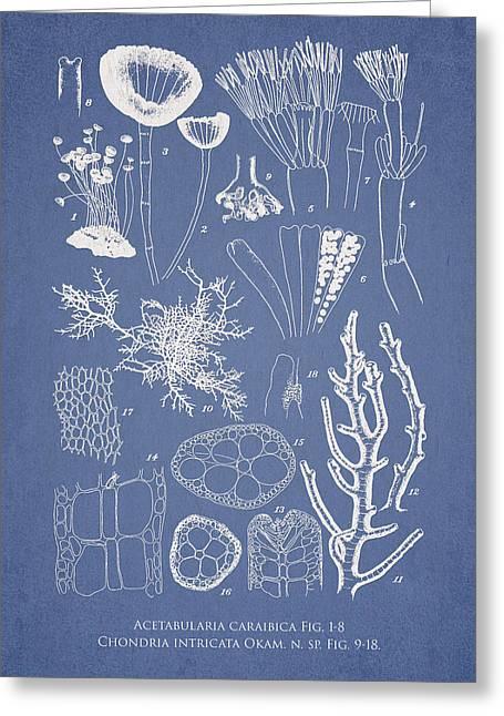 Acetabularia Caraibica And Chondria Intricata Greeting Card