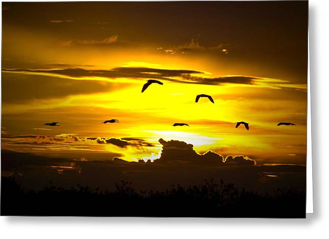 Across The Sky Greeting Card by Mark Andrew Thomas