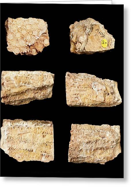 Actinocyathus Borealis Greeting Card by Natural History Museum, London