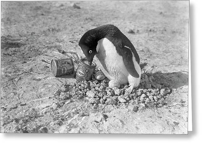 Adelie Penguin Nest In Antarctica Greeting Card