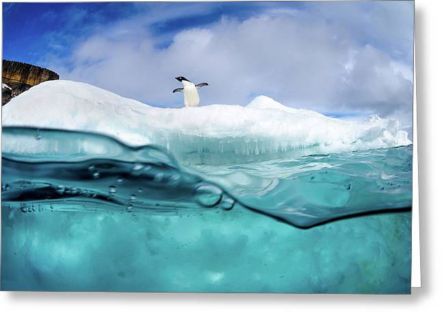 Adelie Penguin On Iceberg Greeting Card by Justin Hofman