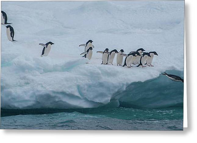 Adelie Penguins Pygoscelis Adeliae Greeting Card by Panoramic Images