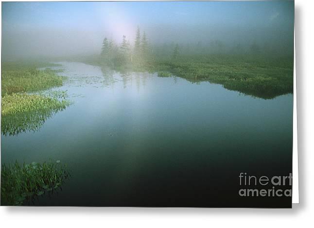 Adirondack Mist Greeting Card by James L. Amos