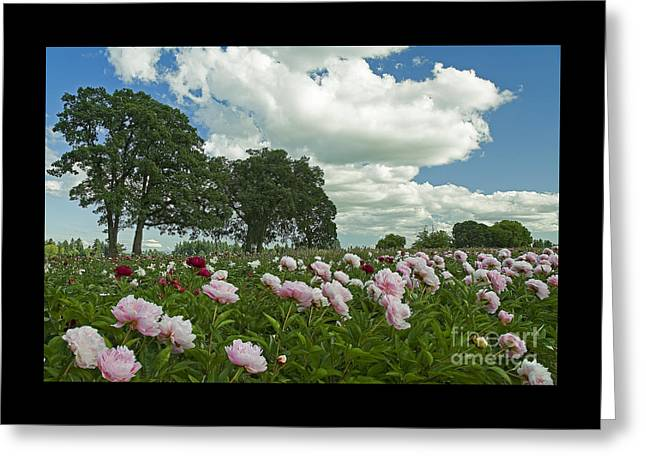 Adleman's Peony Fields Greeting Card by Nick  Boren