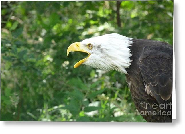 Greeting Card featuring the photograph Adler Raptor Bald Eagle Bird Of Prey Bird by Paul Fearn
