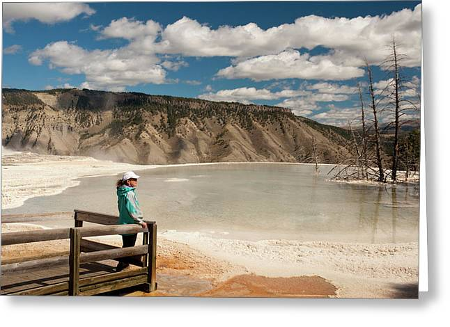 Admiring Canary Springs, Mammoth Greeting Card by Howie Garber