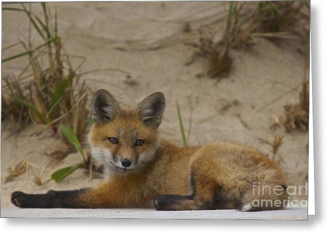 Adorable Baby Fox Greeting Card by Amazing Jules