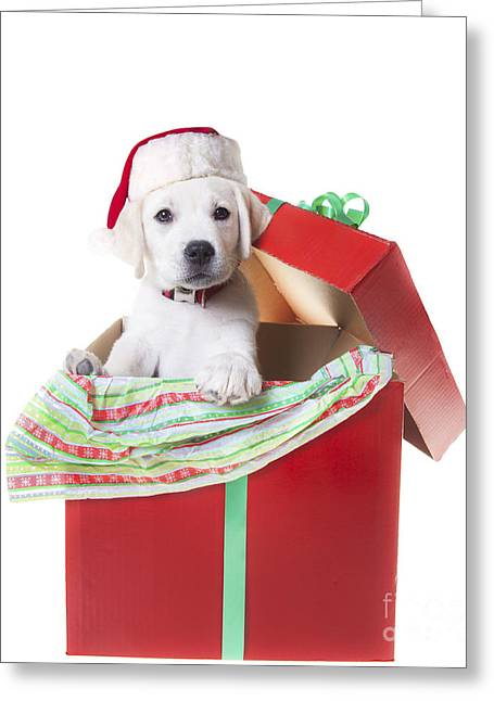 Adorable Christmas Puppy  Greeting Card by Diane Diederich