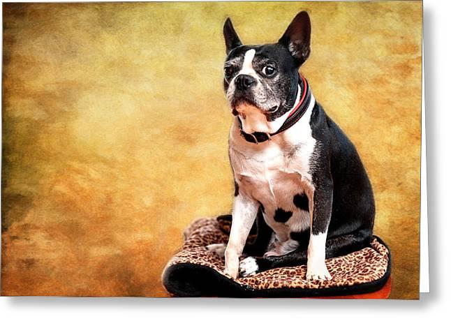 Adorable Pug Andiamo Greeting Card by Vicki Jauron