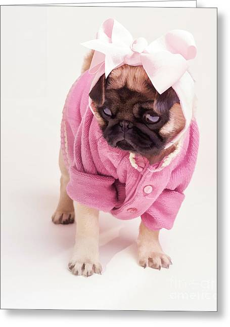 Adorable Pug Puppy In Pink Bow And Sweater Greeting Card by Edward Fielding
