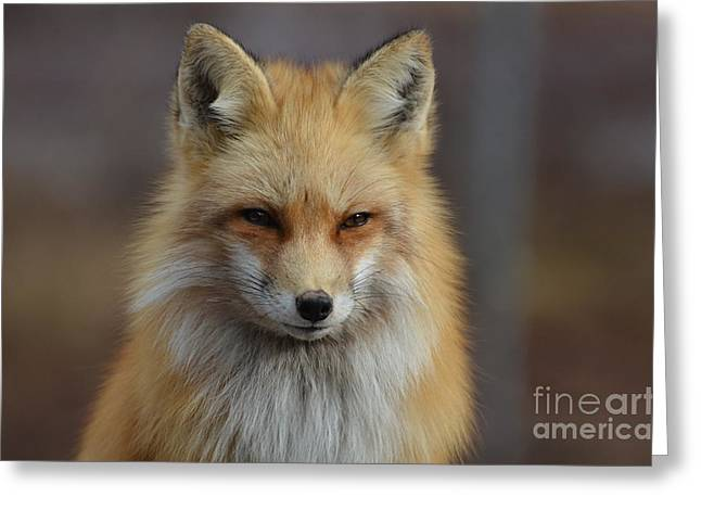 Adorable Red Fox Greeting Card