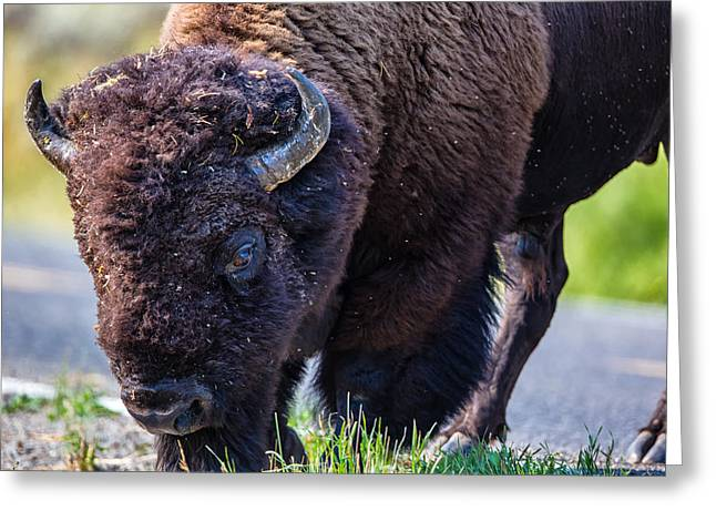 Adult Bison Staring Greeting Card by Andres Leon