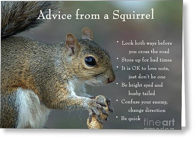 Advice From A Squirrel Greeting Card