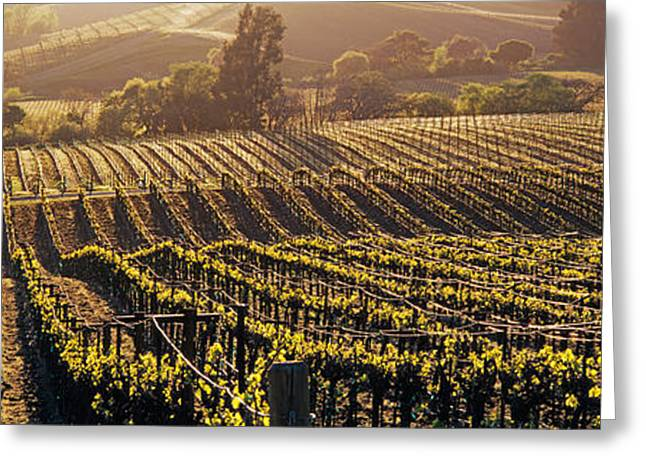 Aerial View Of Rows Crop In A Vineyard Greeting Card by Panoramic Images