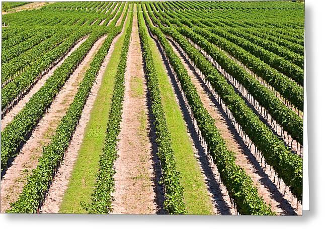 Aerial View Of Vineyard In Ontario Canada Greeting Card by Marek Poplawski