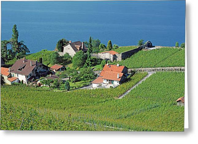 Aerial View Of Vineyards By A Lake Greeting Card by Panoramic Images