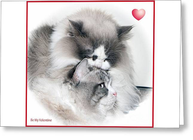 Affectionate Felines Greeting Card