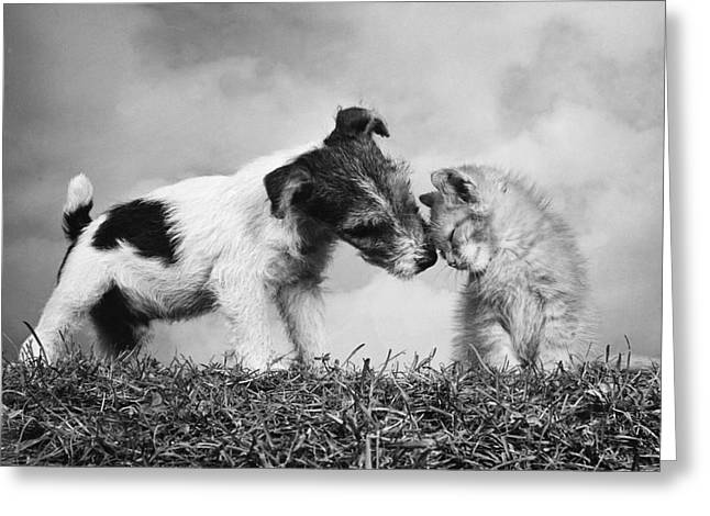 Affectionate Puppy And Kitten Greeting Card
