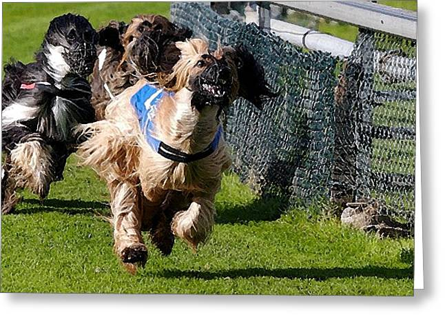 Afghan Hound Racing   Greeting Card by Olde Time  Mercantile