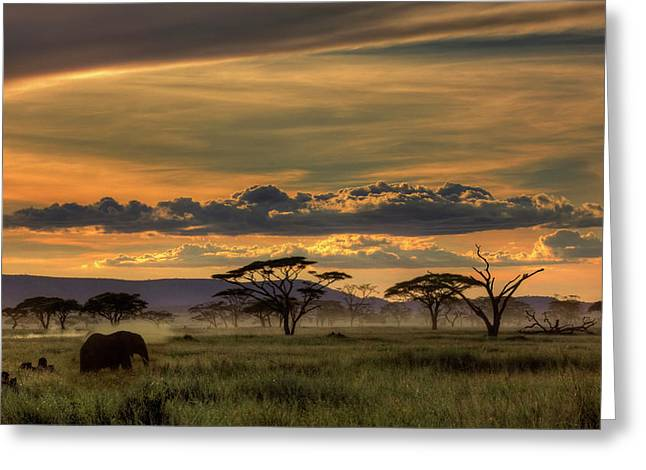 Africa Greeting Card by Amnon Eichelberg