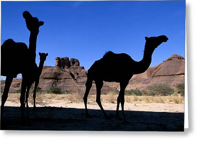 Africa, Chad, Ennedi Massif, Camels � Greeting Card by Tips Images