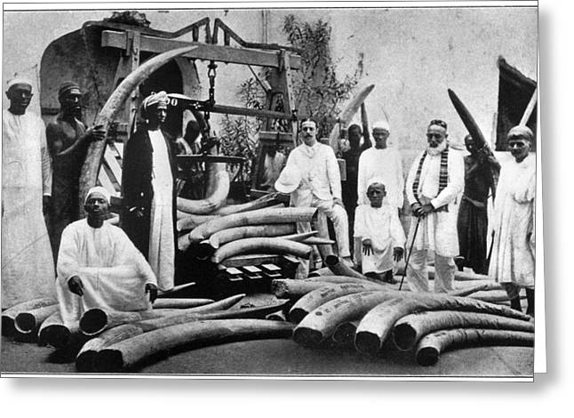 Africa Ivory Trade, C1900 Greeting Card