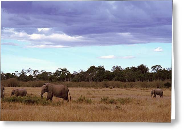 Africa, Kenya, Masai Mara National Greeting Card