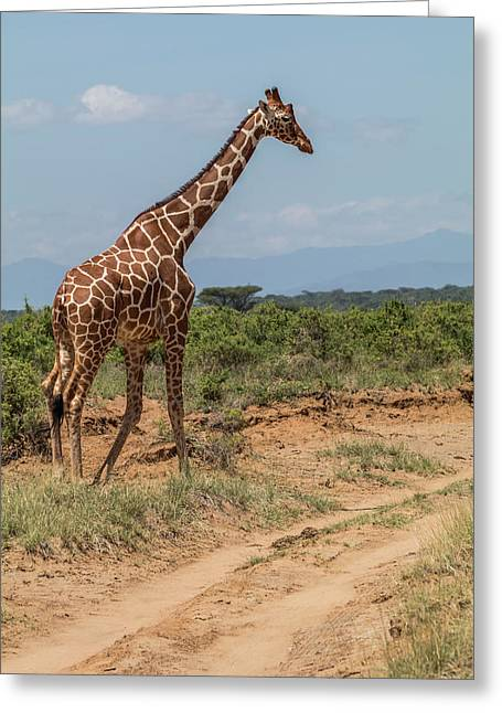 Africa, Kenya, Samburu National Park Greeting Card