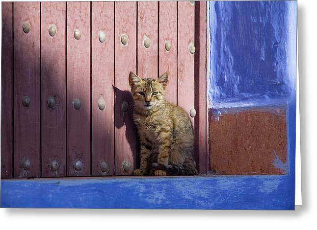Africa, Morocco, Chechaouen, Domestic Greeting Card by Emily Wilson