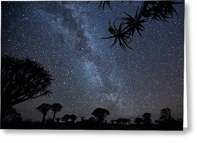 Africa, Namibia Milky Way And Quiver Greeting Card by Jaynes Gallery