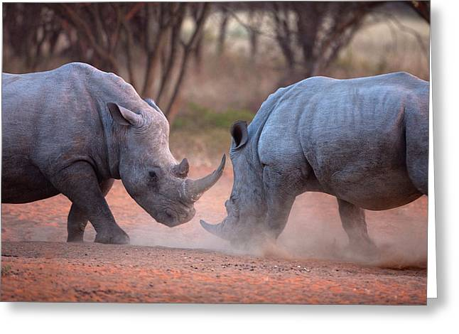 Africa, Namibia White Rhinos Fighting Greeting Card