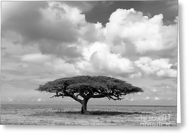 African Acacia Tree Greeting Card