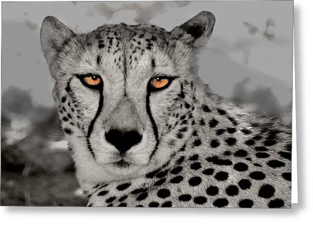 African Cheetah Greeting Card