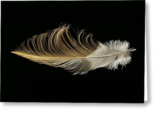 African Crowned Crane Greeting Card by Chris Maynard