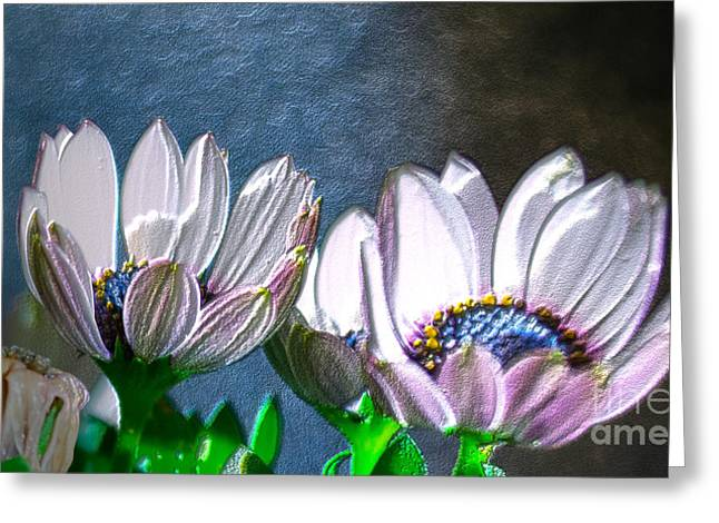 African Daisy Detail Greeting Card by Donna Brown